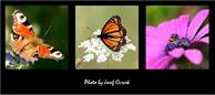 Adobe Photoshop – úprava fotek snadno a rychle