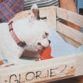 pes ležící v pelíšku vyrobeném z dřevěné bedýnky