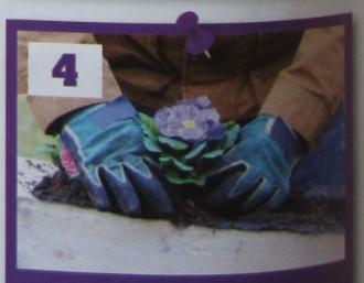 květina zasazená v truhlíku z palety