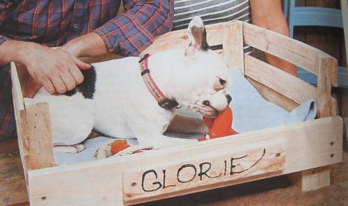 pes si hraje v pelíšku z dřevěné bedýnky