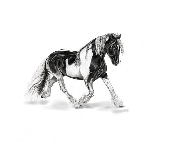 Fotografie koně kreslení pravou hemisférou