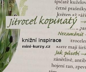 Úvodní fotka článku rubriky knižní isnpirace - kniha Moje domácí lékárna z léčivých bylin
