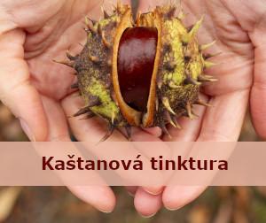 kaštan poleožený v dlaních - úvodní fotka článku Kaštanová domácí tinktura z francovky – postup výroby