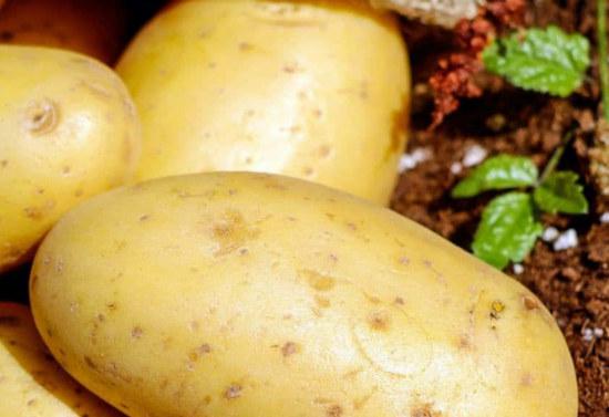 brambor na přípravu bramborové domácí pleťové masky